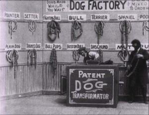 Dog Factory1