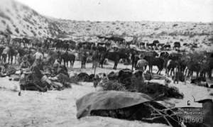 The 8th Australian Light Horse Regiment, at a site near Romani.