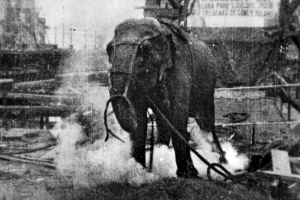 electrocuting_an_elephant_edison_film_1903